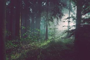 Évente 16.000 négyzetméternyi erdőterület helyreállítását vállalta az ABBYY