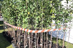 Ötszáz facsemete talált gazdára a XXII. kerületben