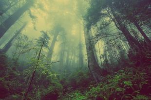 A fiatal és alacsony erdő kevésbé mérséklik a klímaváltozást
