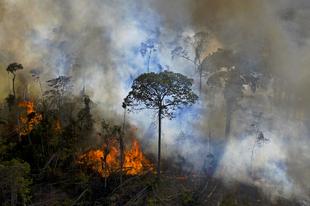 Ha így folytatjuk, szavannává változhat az Amazonas jelentős része