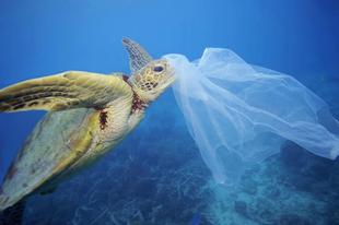 Írd alá a petíciót- Mondjunk nemet az egyszer használatos műanyagokra!