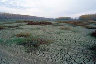 Szükséges, de nem elégséges: a WWF a kormány klímavédelmi akciótervéről