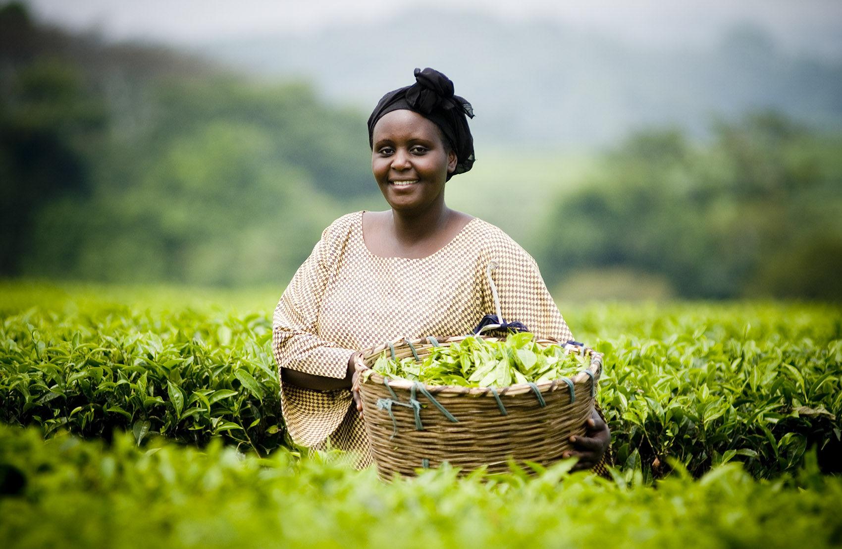 137_1fair_trade_tea_uganda_17.jpg