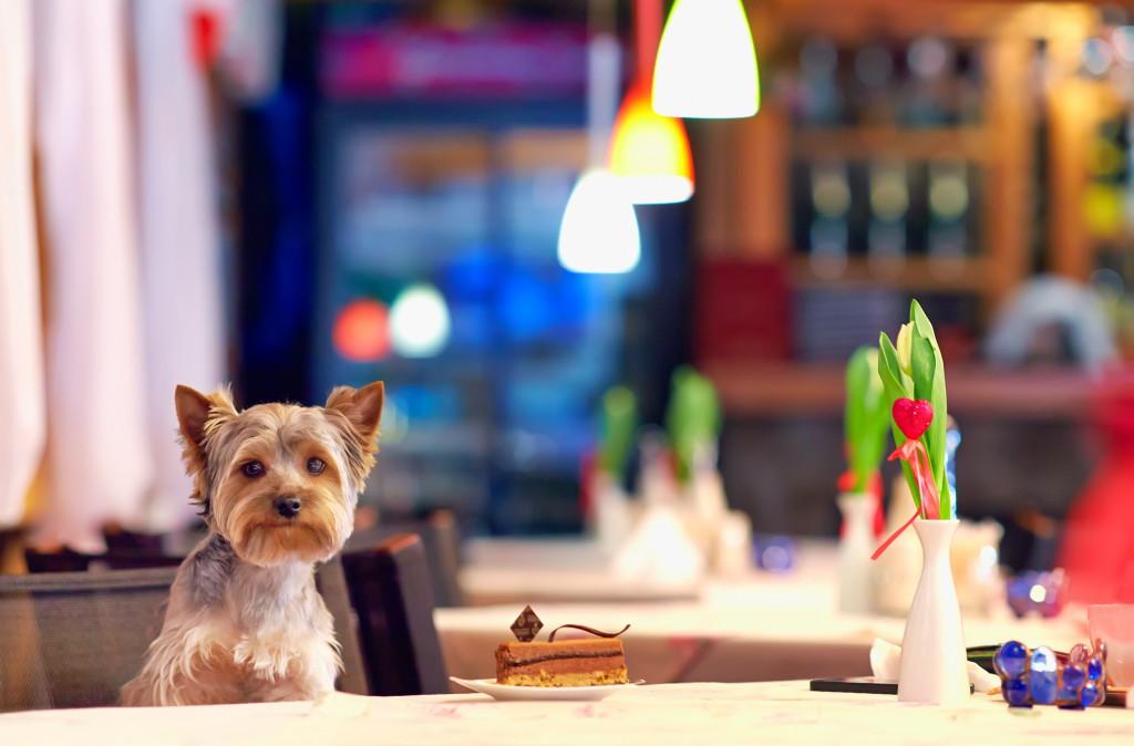 dog-cafe-4-1024x674_1_.jpg