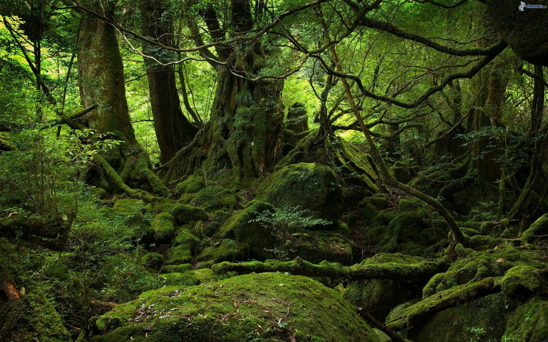 foret-vierge_-arbres_-mousse_-vert-178945.jpg