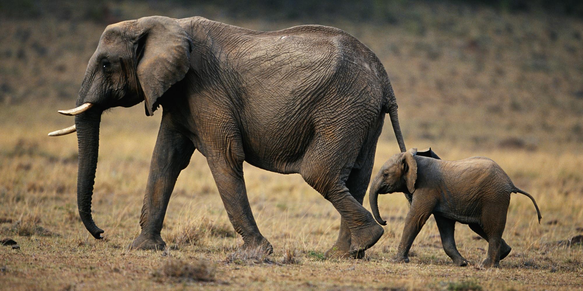 o-elephant-facebook.jpg