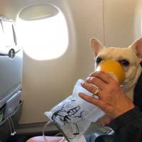Emberségből jeles: a JetBlue crew oxigénmaszkkal mentette meg Darcy életét