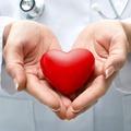Rekordszámú szívátültetést végeztek idén a Semmelweis Szív- és Érgyógyászati Klinikán