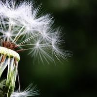 Így növeld az allergia mentes éveid számát