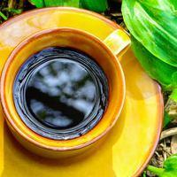 Ezért  fogod szeretni a gyógygombás kávét!