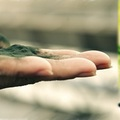 Szuper-táplálék a szervezetnek – A spirulina alga