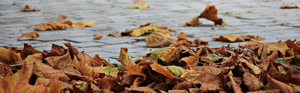 autumn-1685924_960_720.jpg