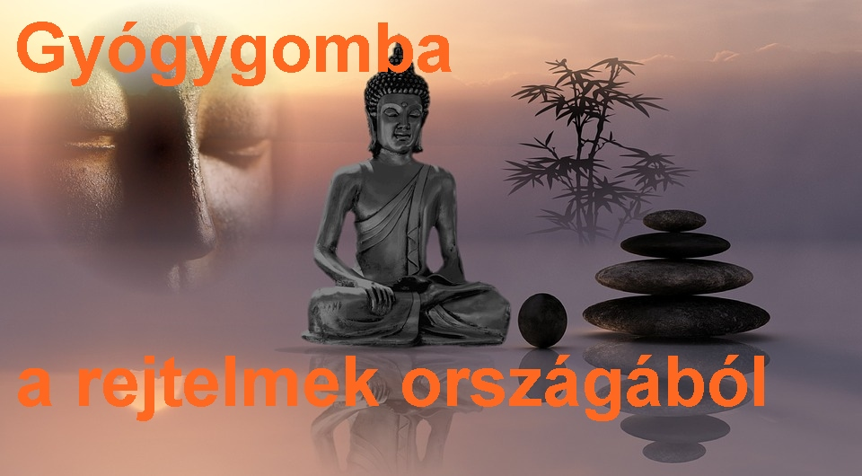 buddha-918068_960_720.jpg