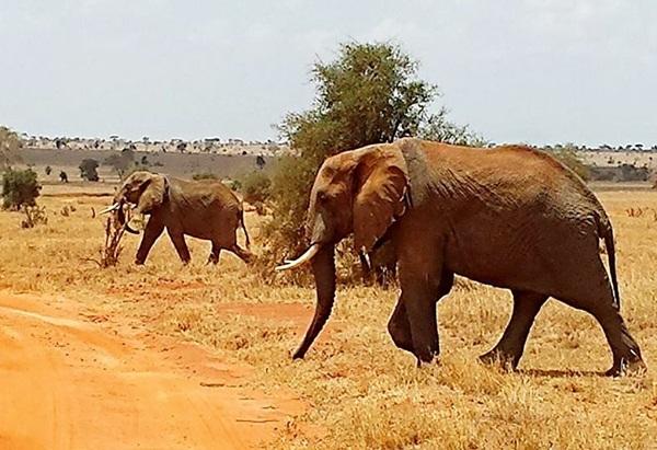 elefantok2_k.jpg