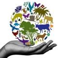 Biodiverzitás és Konzervációbiológiai Kutatócsoport előadásai áprilisban