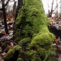 A kerecsendi Berek-erdő honlapja