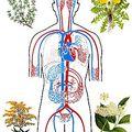Fizikai testünk egészségének négy alappillére
