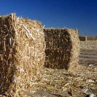 Semmi gáz - jöhetne a biomassza?