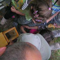 Megvizsgáltuk az érsekkerti odúkat
