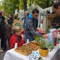 Természet adta gyógynövények a családi patikában és a Vallon utcában