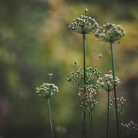 Ehető gyomok, vagyis vadnövények