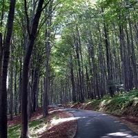 Avar-kortól a napjainkig teljesítménytúra, avagy a Kőszegi-hegység útvesztőjében...