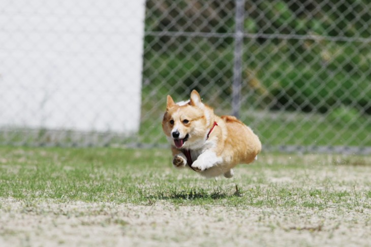 running_happy_dog-730x487.jpeg