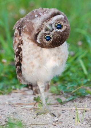 owl.jpeg