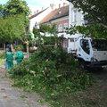 Több fa dőlt ki az éjszakai vihar hatására
