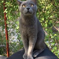 Elveszett macskát keresünk