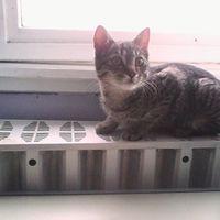 Talált cica a Mészáros utcában