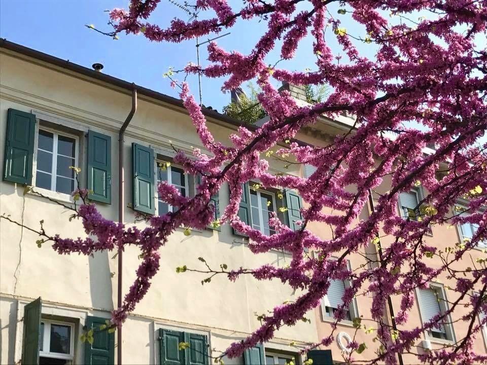 cseresznyeviragok_4.jpg