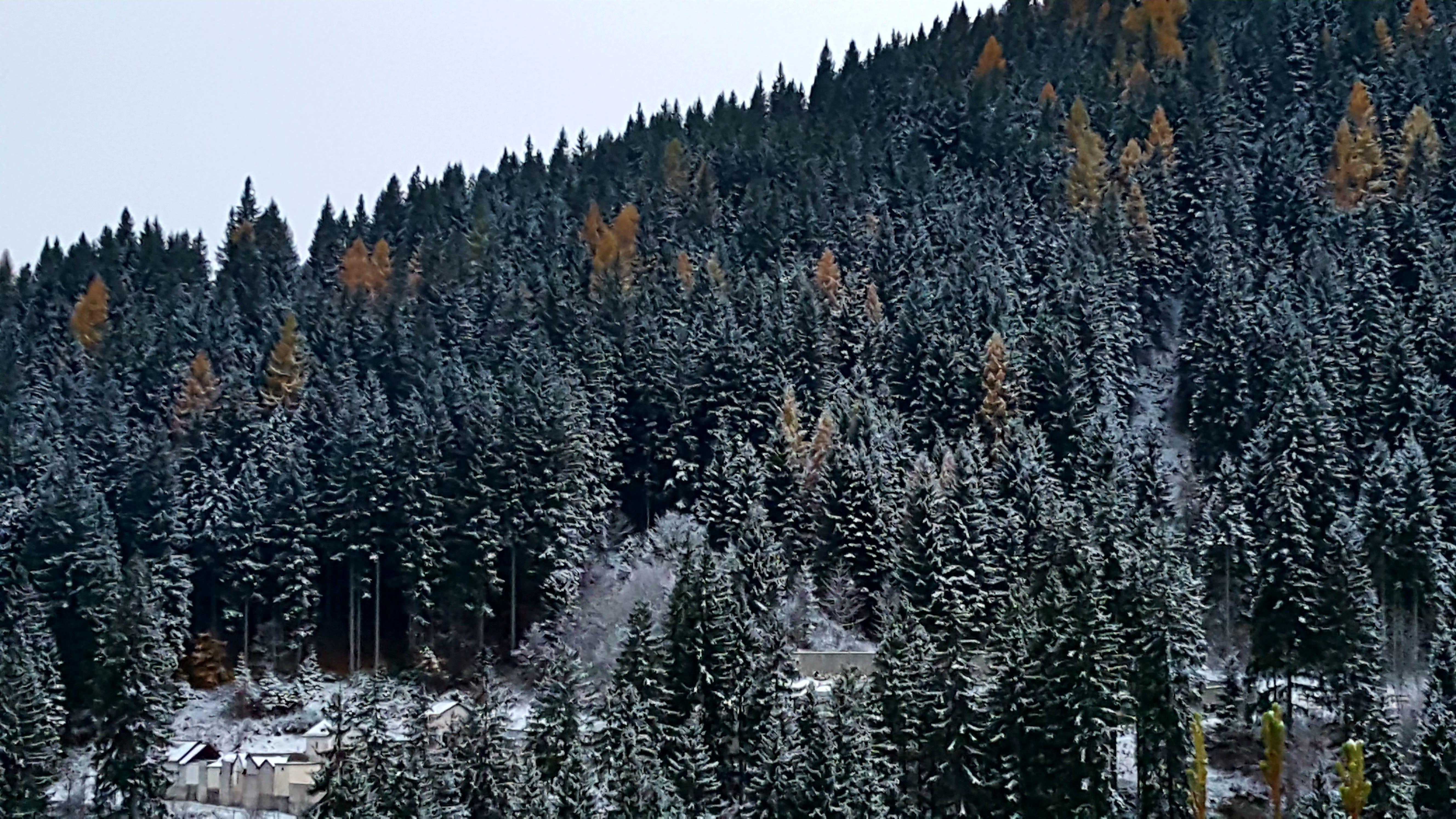 havas_fenyok_kozelebb.jpg
