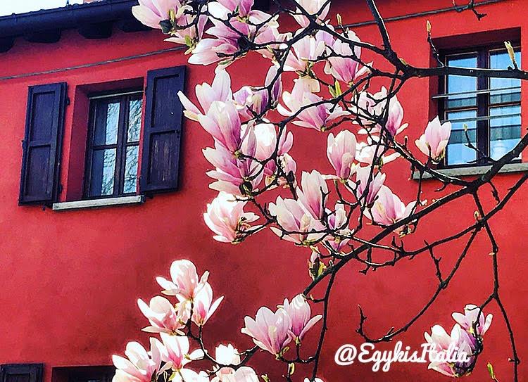 magnoliak_a_haz_elott.jpg
