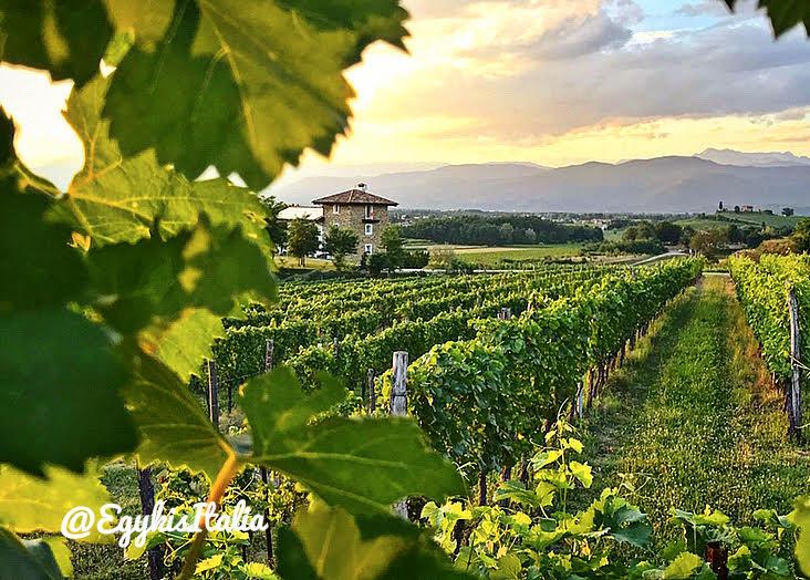 Friuli ízek, Frico csodák, Prosciutto hegyek