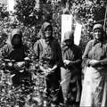 A tiszazugi arzénes asszonyok