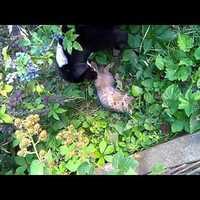 Cat and Dog – Marcipán és Bogi 3