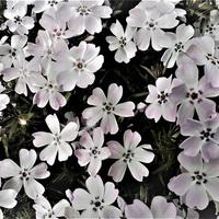 Virágok nélkül