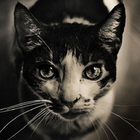 Egy macskáról