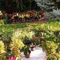 Őszi virágok - Autumn flowers