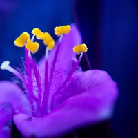 Virág - Flower