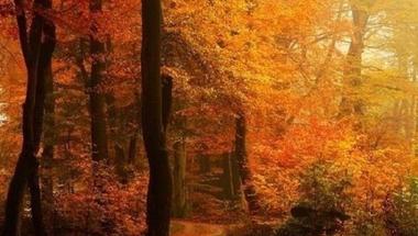 Ősz - a varázslatos színgazdagság