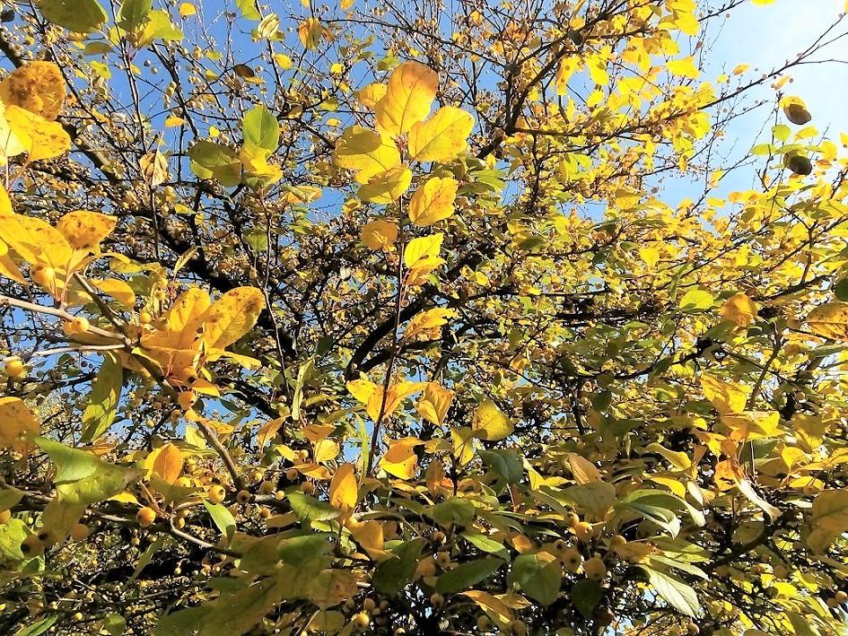 autumn_kerepes_34_nemeth_gyorgy_foto.jpg