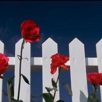 White Fence - Sticky Fruitman Has Faith