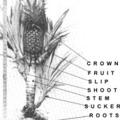 Az ananász gondozása