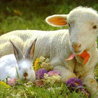 Kellemes húsvétot!