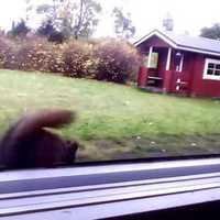 A bátor, finn mókus megvédi a kajáját