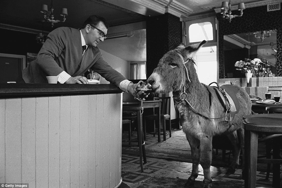 east_end_donkey_steve_lewis_picture.jpg