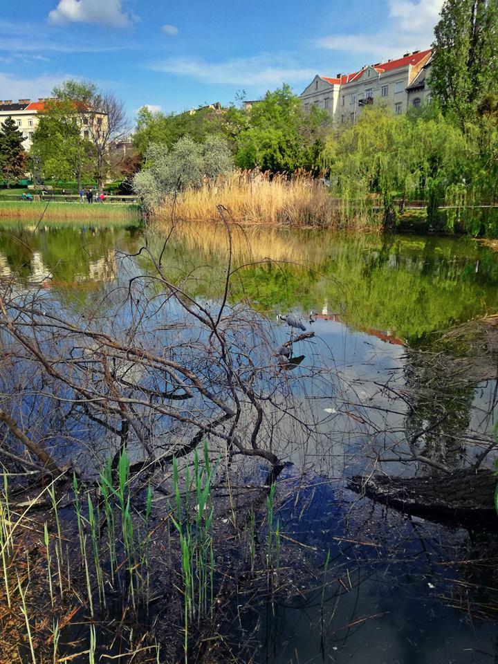 A tó és a szürke madár
