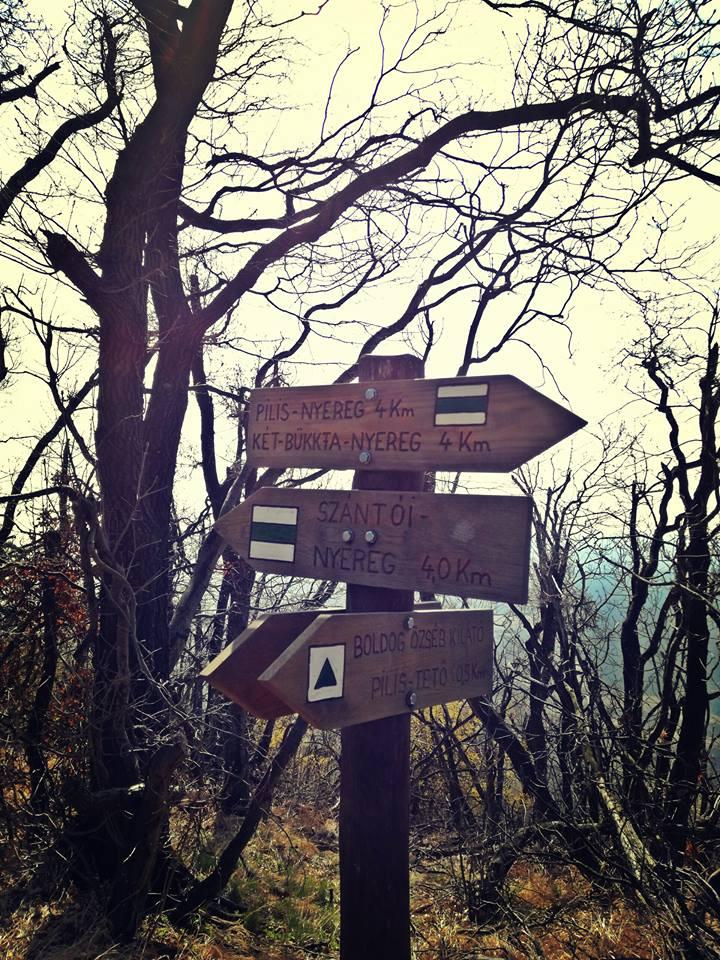 Merre menjünk?